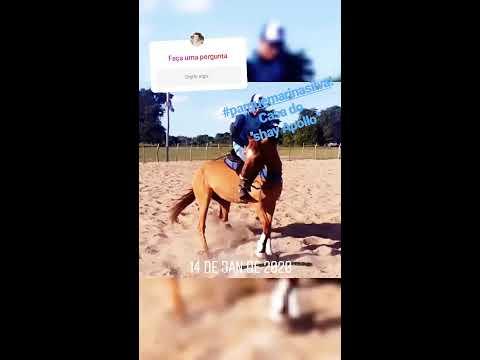 Cavalinho testado no prq Marina Silva serrinha RN