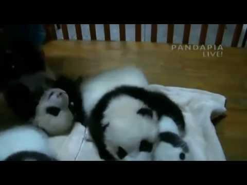 Panda Nursery[10]7.09.14