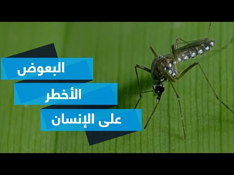 ابتكار قد يقضي على أخطر أنواع البعوض  - نشر قبل 3 ساعة