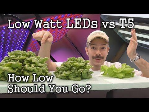 Low Watt LEDs vs T5 Grow Lights: Seed Starting / Lettuce Test