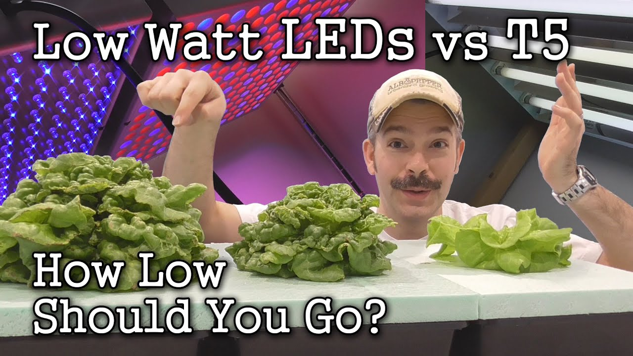 Low Watt Leds Vs T5 Grow Lights Seed Starting Lettuce Test