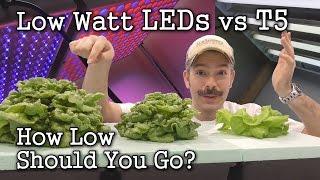 low watt leds vs t5 grow lights seed starting lettuce test