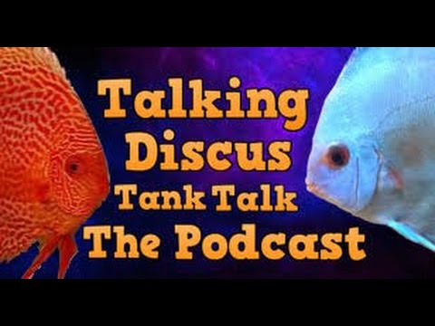 Talking discus tank talk the podcast youtube