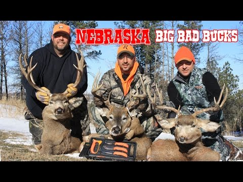 Nebraska Deer Hunting:  Whitetail AND Mule Deer Bucks