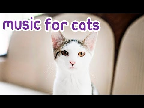 Cat Music: Peaceful Music to Calm and Relax your Kitten!