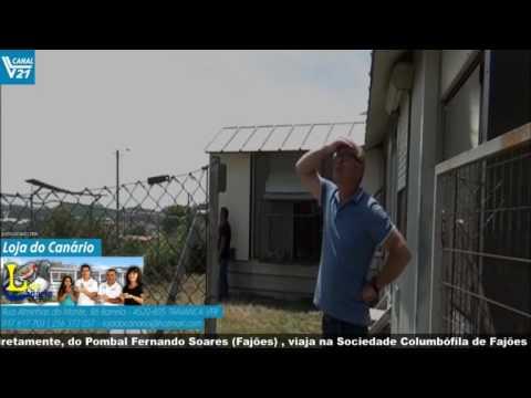 Columbofilia  VillaRobledo AAveiro  Fernando  Soares  2  SCFajões  VL21