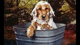 Как мыть собаку зимой ?!