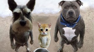 Самые смешные животные Приколы с котами и собаками 2021 11