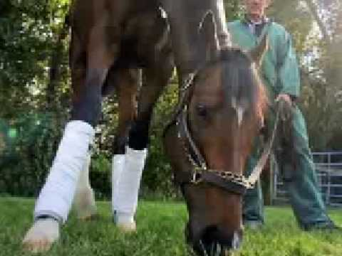 You're Still You, Barbaro Forever in Our Hearts