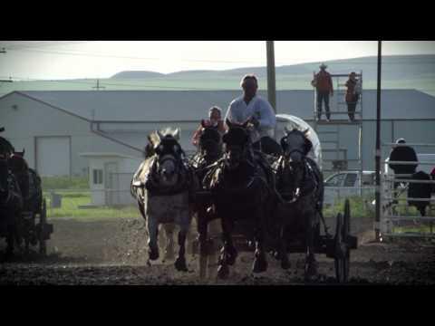 Mark Sutherland - Retirement of a Chuckwagon Horse