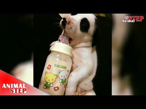 Puppy Crying for Milk after His Mother Died– Heartbreaking Story of Puppy