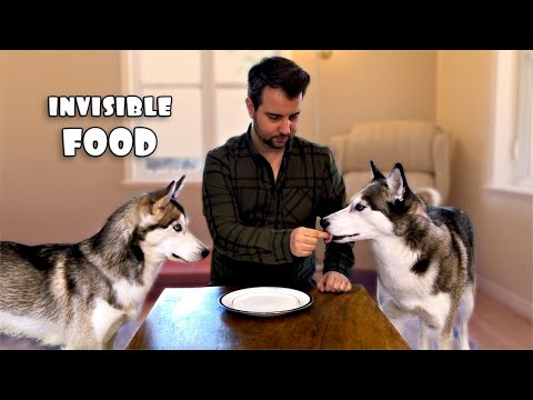 Invisible Food Prank: My Huskies Think I'm Crazy! | SUBTITLED