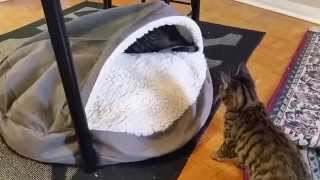 Cute -- Cats Fighting In Cave Bed
