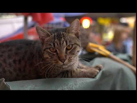 Cat Hissing Jeegar Joshi