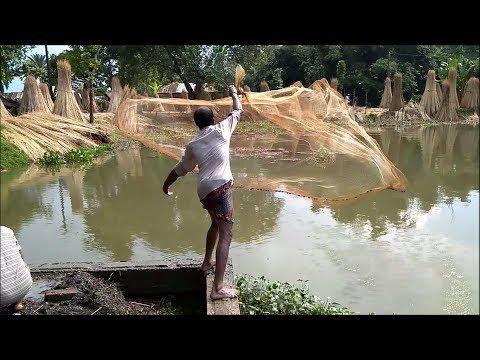 Fish catching by fishing net   Fish Market   Fish cutting. 3in1 video.