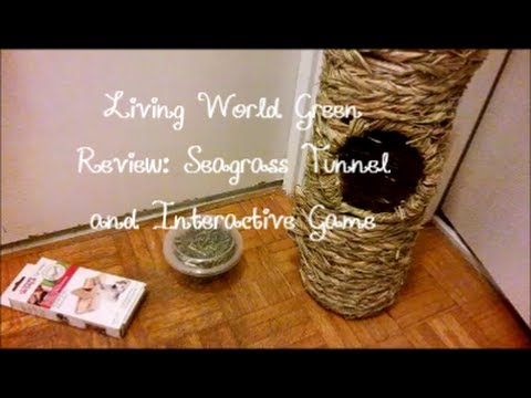 Living World Green Review   Seagrass Tunnel and Interactive Game