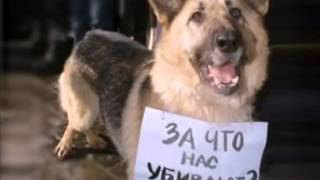 Грустное видео про собак(Очень грустое видео., 2012-05-12T18:17:08.000Z)