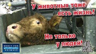 Грустно! ДЕТИ ПЛАКАЛИ, когда смотрели фото животных с ферм