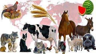 Одомашнивание животных и растений. Изучение доместикации и приручения. Примеры селекции и отбора