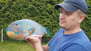 видео Рыба-попугай