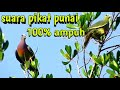 Suara Pikat Burung Punai Terbaru  Mp3 - Mp4 Download