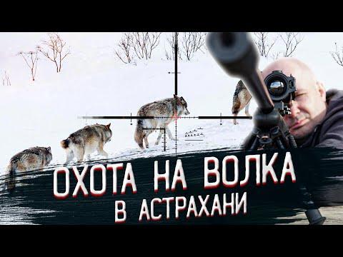 Охота на волка,
