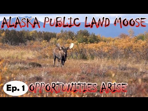 ALASKA MOOSE hunting public land