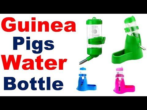 Guinea Pig Water Bottle | Best Guinea Pig Water Bottle | Water Bottle For Guinea Pig  |