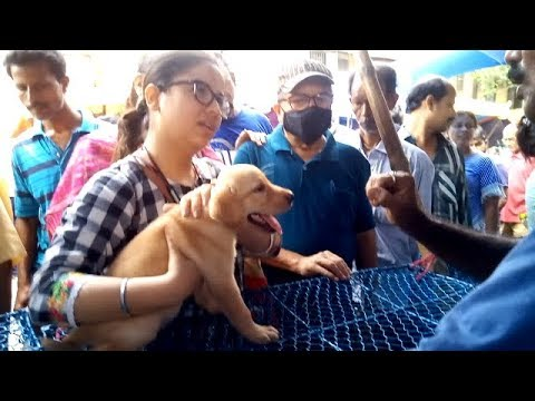 Beautiful Girl Gets Her Favourite Labrador Puppy At Galiff Street l Price 12000