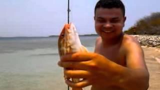 pesca de parguito en isla larga venezuela