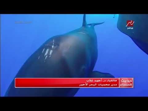 الكائن البحري الغريب الذي تم العثور عليه هو نوع من الدلافين يسمي