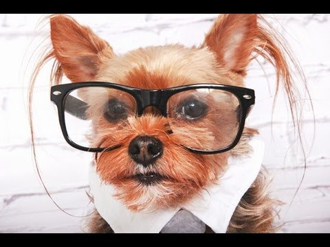 Hipster Dog: Funny Talking Dog!