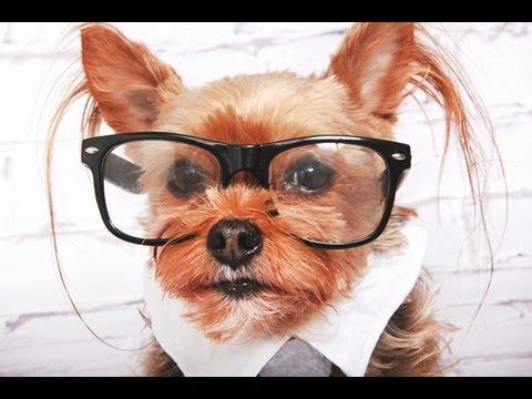 Hipster Dog: Funny Talking Dog!