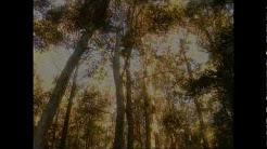 John Williamson - Rip Rip Woodchip [Official Video]