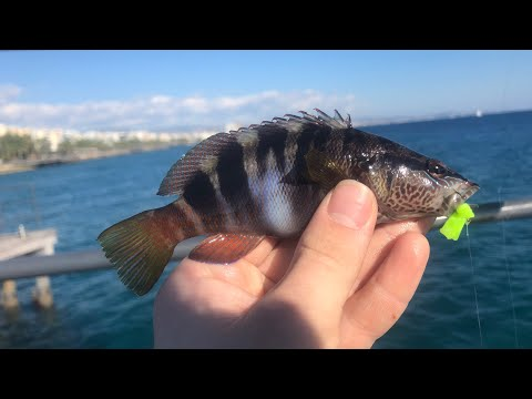 Multi-Species Fishing The Mediterranean Sea, Cyprus