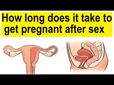 How long does it take to get pregnant after sex | How long does it take to get pregnant