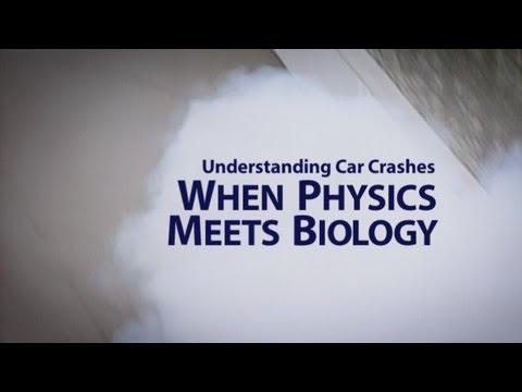 Understanding Car Crashes: When Physics Meets Biology