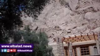 أشجار'الزيتون' المعمرة بدير سانت كاترين عوامل جذب سياحي مهملة.. فيديو وصور
