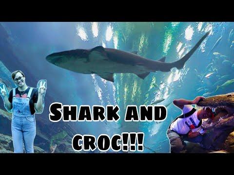 Exploring Dubai Aquarium & Underwater Zoo| Nars tinay