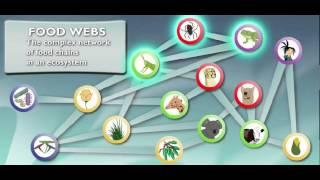 Study Jams - Food Webs