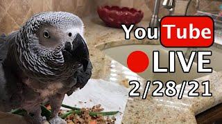 🔴🐦Einstein Parrot LIVE! 2/28/21