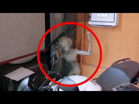 5 Extraterrestrials Caught on Tape - Best Alien Videos