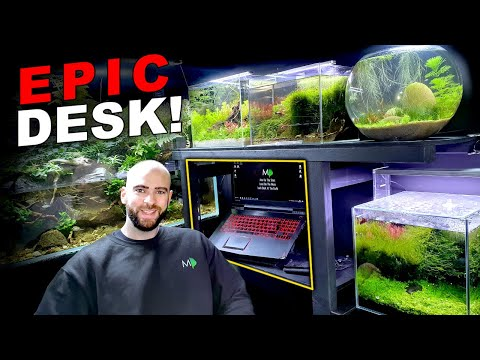 I BUILT A FISH TANK DESK SURROUND!! NANO AQUARIUMS || MD FISH TANKS