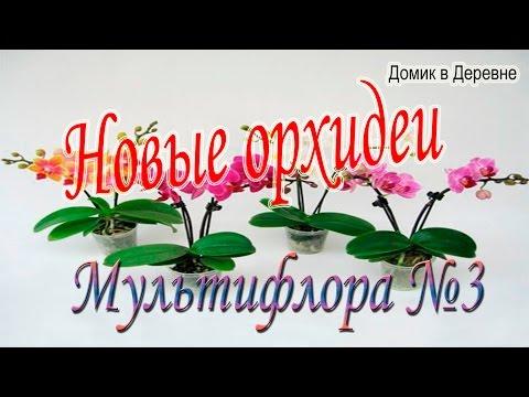 Новые орхидеи. Мультифлора №3.