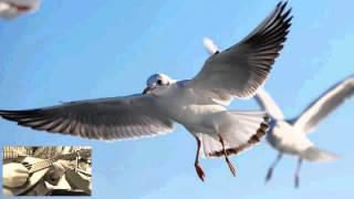 赤い鳥の「翼をください」をマンドリンで弾いてみました。 作詞:山上路...
