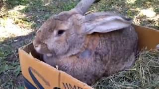 Выставка-ярмарка кроликов, птицы. Луганск 02.06.2018 год.