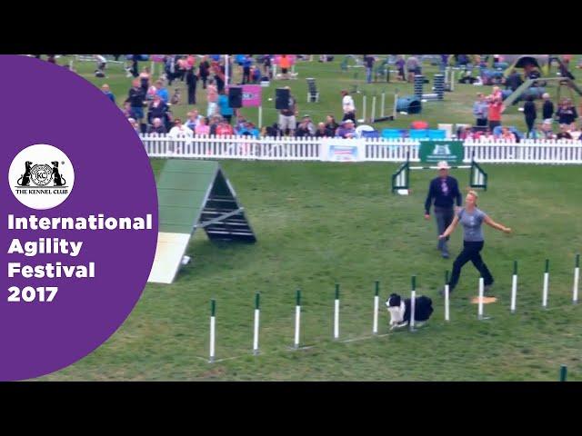 Olympia Quarter Final Large - G3-5 Novice - Part 5 | International Agility Festival 2017