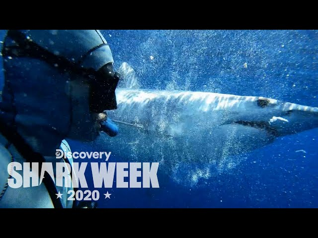 Diving with Mako Sharks | Shark Week