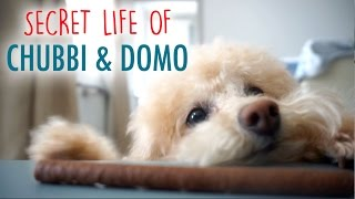 Secret Life Of Chubbi & Domo