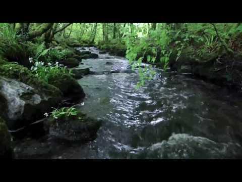 Wolna Grupa Bukowina  - Rzeka / WGB - Dobra rzeko
